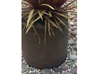 Selection of 4 outdoor patio pots with palm included