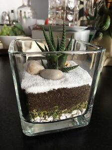 Beautiful terrariums arrangements for SALE.