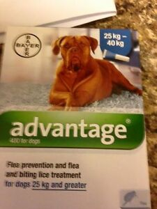 Large dog flea treatment, same you get from a vet