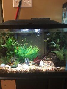 20 g fish tank and supplies