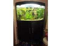 Juwel Trigon 190L corner tropical fish tank & fish