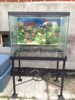 55 and 30 Gallon Aquariums with all the accessories