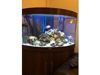 Fish tank for sale 180 litres marine whole setup.