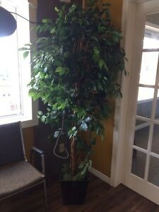 ARTIFICIAL FICUS TREE IN POT London Ontario image 1