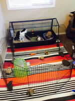 2 Bunnies/ accessories, cage with play yard