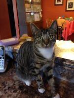 Free - female cat - one year old!