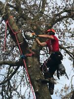 Tyler's Tree Services - Winter rates