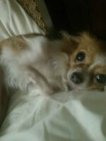House / Pet Sitter in Duncan