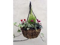 Winter hanging baskets