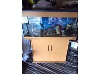 Flu al fish tank and stand full set up