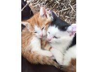 1 adorable kitten left looking for a forever loving home