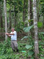 Teak, Mahogany, Rosewood, Cacao Plantation Property Belize