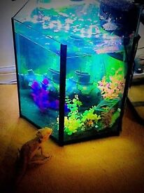 45l Fish Tank (No lid)