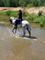 Appaloosa gelding for sale may trade