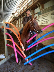 For all your horse needs-training, tune-ups, showing, lessons...
