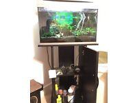 Fish tank full setup planted 60L tetra