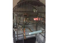 Medium/Large parrot cage + Toys