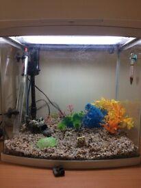 New Tropical Fish Tank