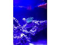 Live rock marine fish tank