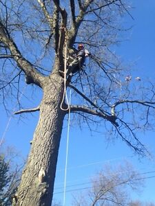 Affordable Tree Trimming and Removal London Ontario image 3