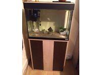 90 liter fish tank and cupboard