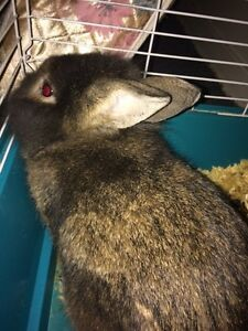 Selling rabbit