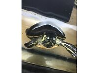 Big Turtle terrapin with aquarium slough pickup