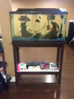 Various types Cichlids/33 Gallon Tank/Stand