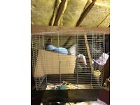Large cockatiel cage for sale £20