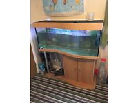 4ft fish tank and stand with external filter
