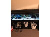 150L Aquarium and all accessories