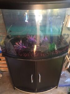 30 Gallon Bow Front Tank & Stand plus lots more