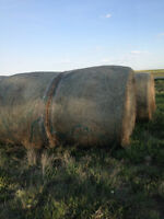 FOR SALE 12 ROUND HAY BALES - ALFALFA / GRASS / FOXTAIL