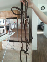Bridle for sale