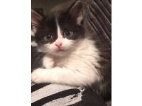 Kitten 5 months old