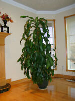Moving, must sell 1 house plant