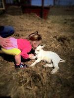Down To Earth Farms Petting Zoo