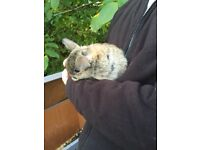 Baby bunnie