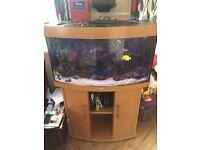 Marine Fish Tank *Complete Set Up*