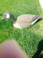Goose decoys and blinds