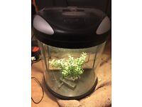 39l curved fish tank