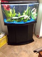 55 gallon BOW FRONT fish tank Full set up