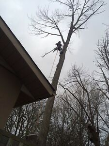 From The Ground Up Tree Care Kawartha Lakes Peterborough Area image 3