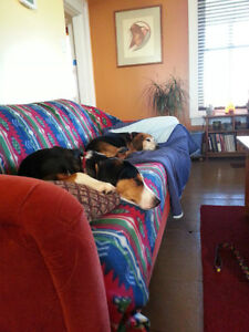 Dog Boarding ~ In-Home Overnight and Day Care Kingston Kingston Area image 7