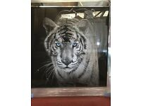 Large Tiger liquid art in mirror frame new be quick