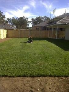 Sapphire soft Buffalo lawn / Turf Sydney City Inner Sydney Preview