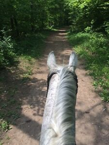 Looking For: horse farm, barn to lease or rent