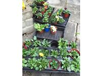 Bedding and tub plants quality stock