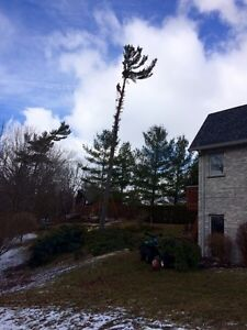 Tree services  London Ontario image 3
