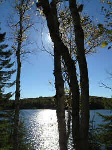 25 Acres of Waterfront Land for Sale on Lynx Lake
